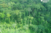 Help Protect 75,000 Acres of Congo Basin Forest