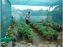 The rooftop garden at AME Foundation in Bangalore