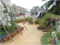 TGC demo and test garden site at AME Foundation