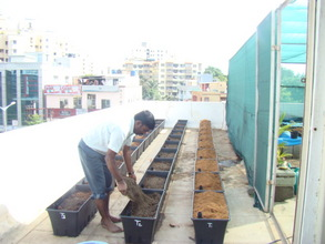 Planting the EarthBoxes