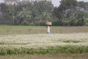 AMS farmer with crop of gourd