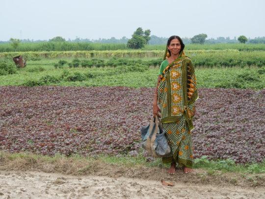 Teaching organic farming to 500 families in India