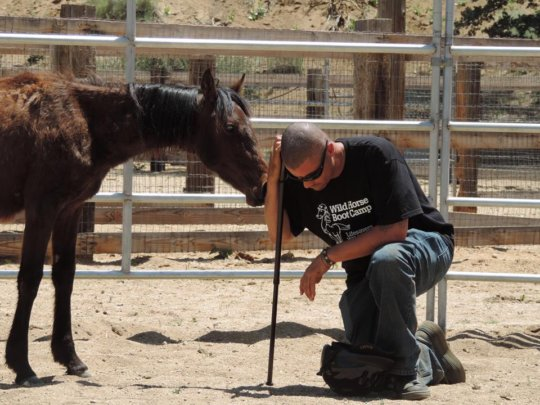 Wild Horses Foundation
