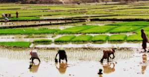 Sustainable agriculture in Sunderbans, India