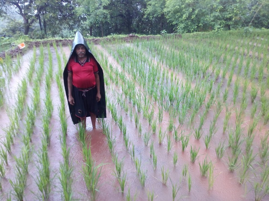 Demonstration of Saguna Rice Technology 2
