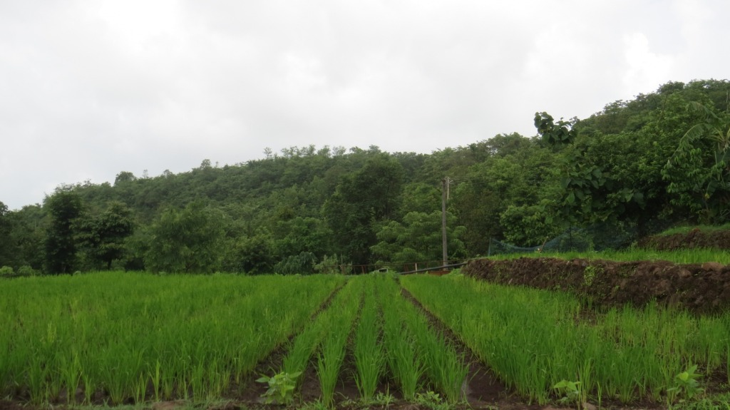 Demonstration of Saguna Rice Technology 1