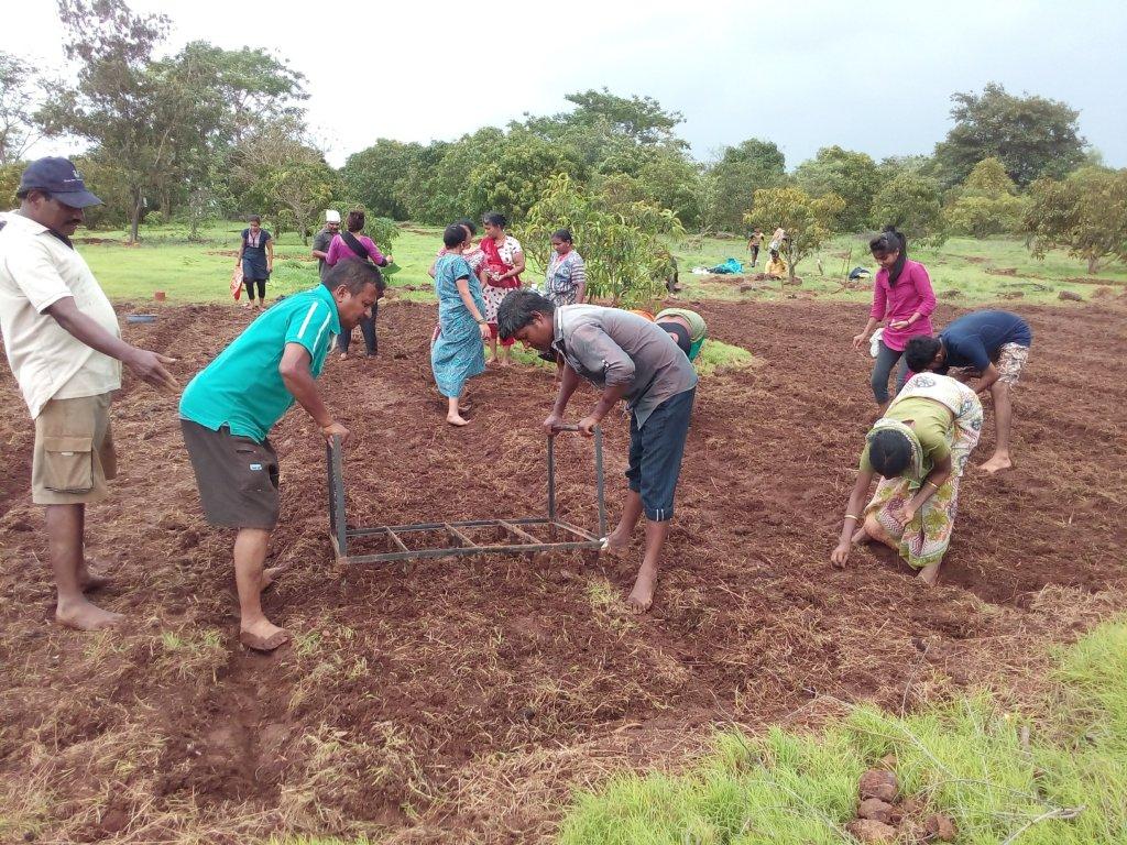 Land preparation for SRT rice cultivation