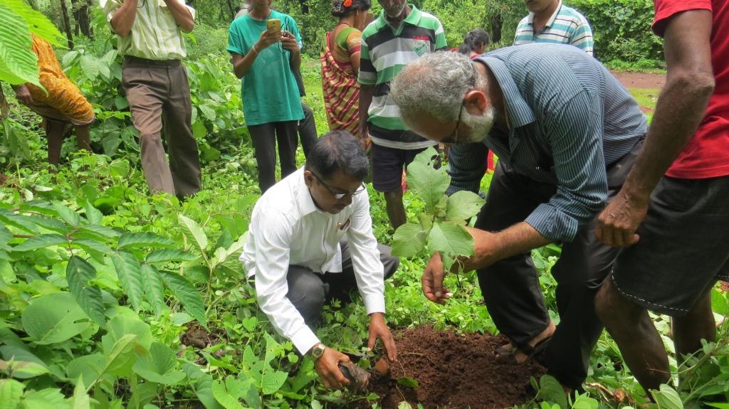 Plantation of native trees