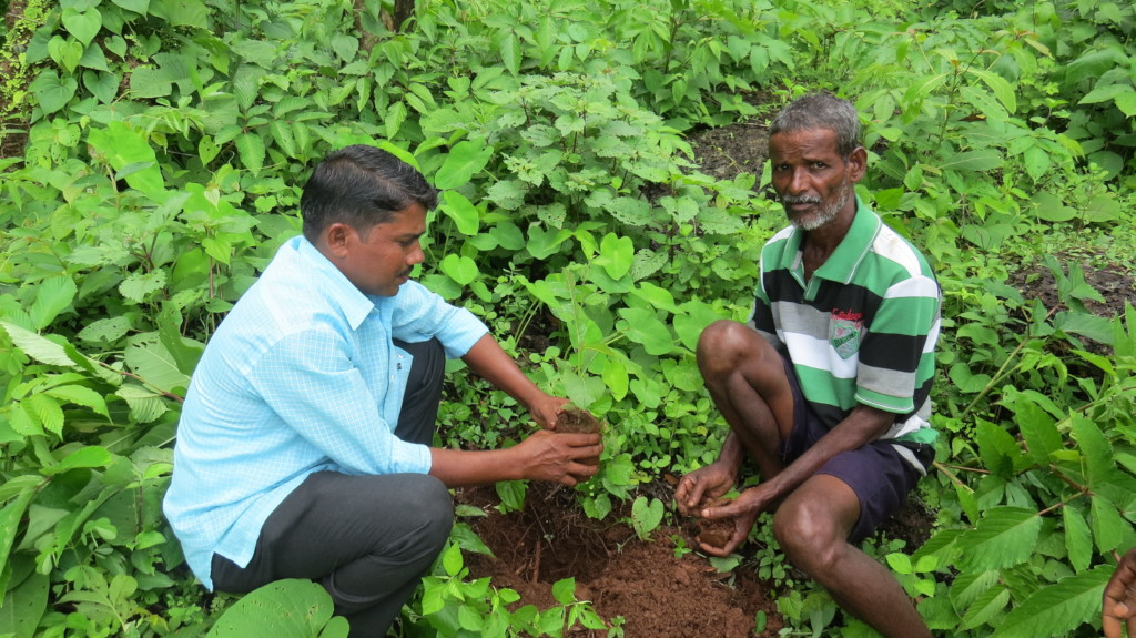 Tree Plantation at Choravane