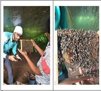 HoneyBee Farm Visit and Handling Observation