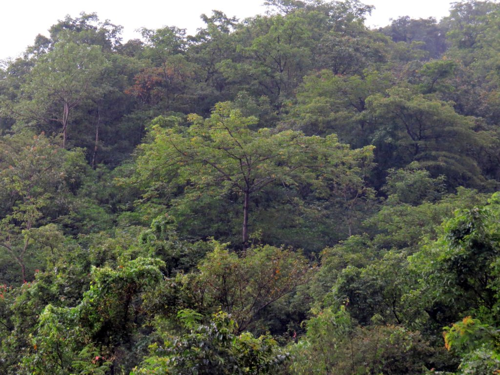 My Jungle - Participatory Forest Conservation