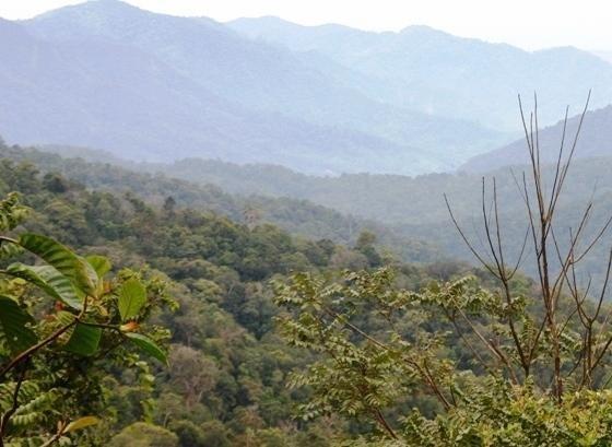 Save Orangutans from Extinction