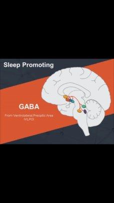 Sleep Promoting GABA