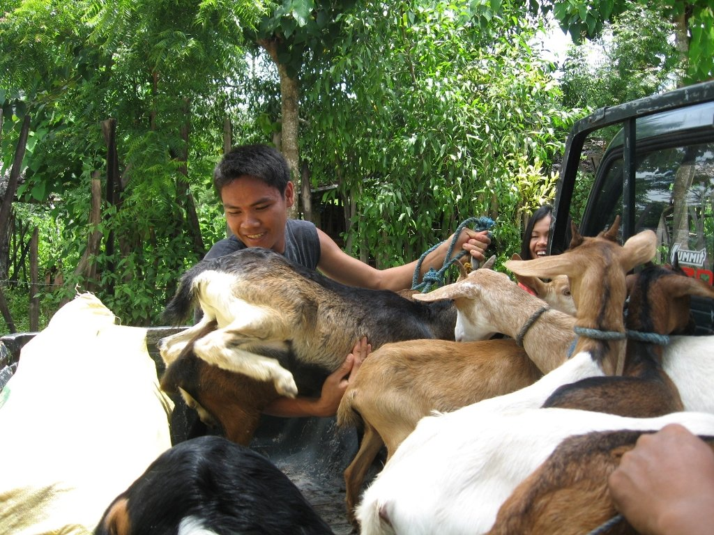Goats for Poor Farming Families in the Philippines
