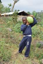 Harvesting watermelons