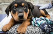 Help rescue shelter dogs & cats