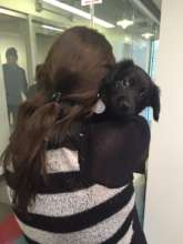 Employee enjoys puppy snuggles