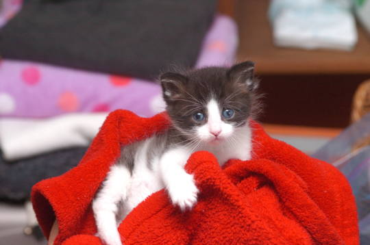 Mailbox kitty at 4 weeks old