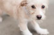Donate to help stop animal cruelty
