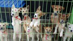 pups rescued from South Korea