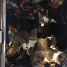 Litter of 5 day old puppies