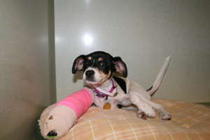 Veterinary care  for relinquished animals