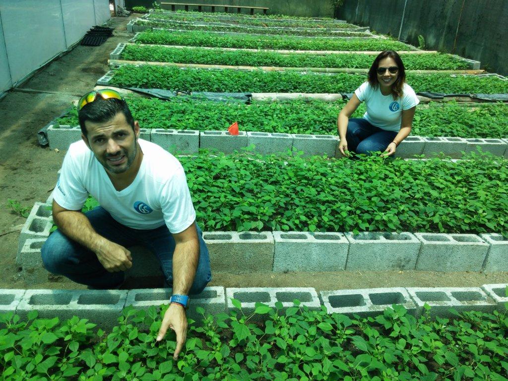 Build a community tree nursery in Costa Rica