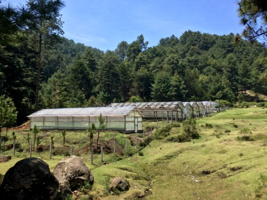 EcoLogic greenhouses for reforestation