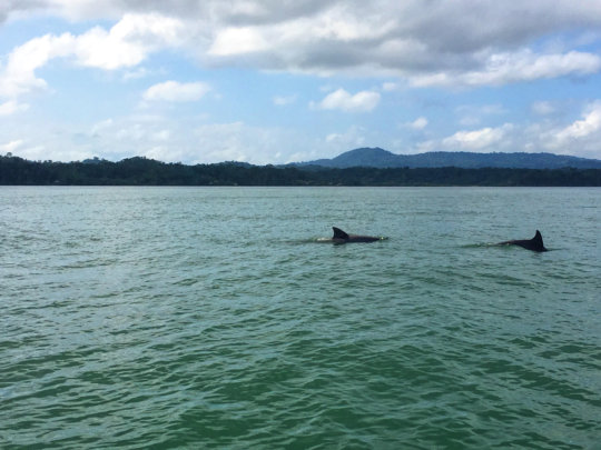 Dolphins tagging along on our visit with MAR Fund
