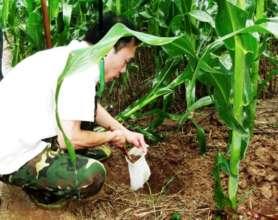 Science Inquiry - Soil sampling for fertilization