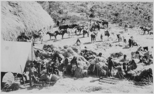 W.M. Apaches delivering hay to Fort Apache