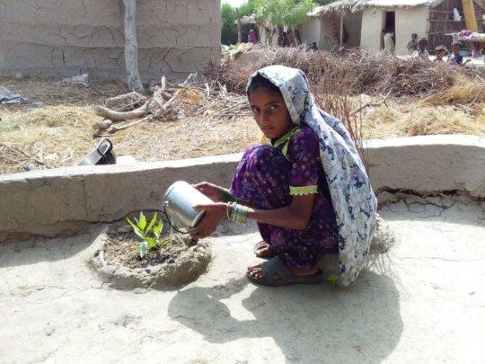Bajani women planting trees