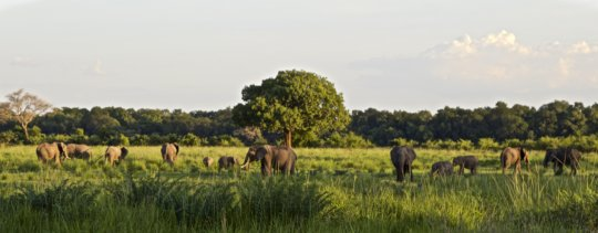 Elephants in the Luangwa Valley