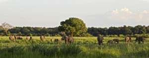 Elephants in the Luangwa Valley