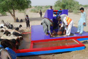 The animals of Thar quenching thirst from water.