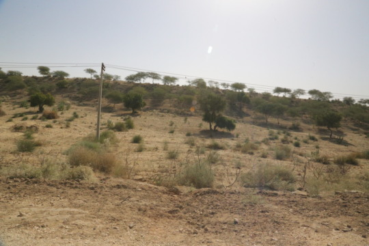A view of thar desesrt