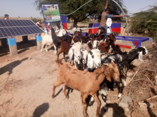 Animals Drinking Water from New Water Well