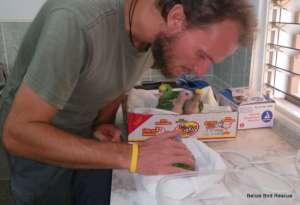 Michal checking the yellowhead babies