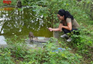 Pre-release farewell to whistling duck baby