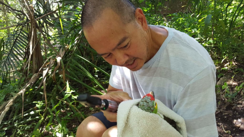 Dr Duane checking eyes of the red lored