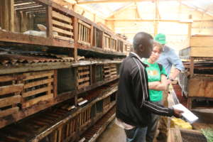 Touring the rabbit hutches in Bunzi