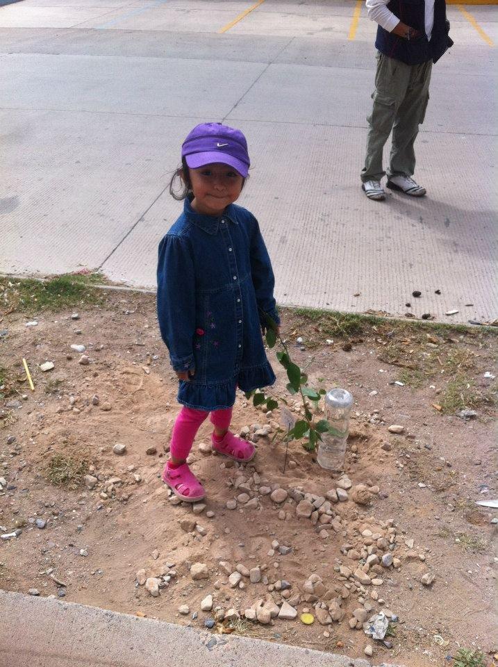 Plant & protect 10000 trees in San Luis Potosi