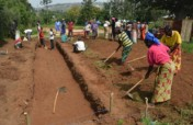 Feed Marginalized Families Through Gardens