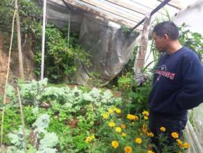 Greenhouse to be re-built
