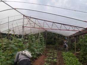 Greenhouse to be improved