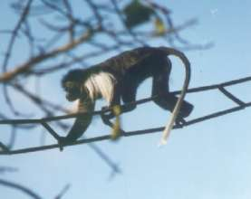 Colobus Conservation's