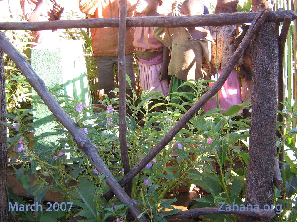 Runoff keeps the garden green