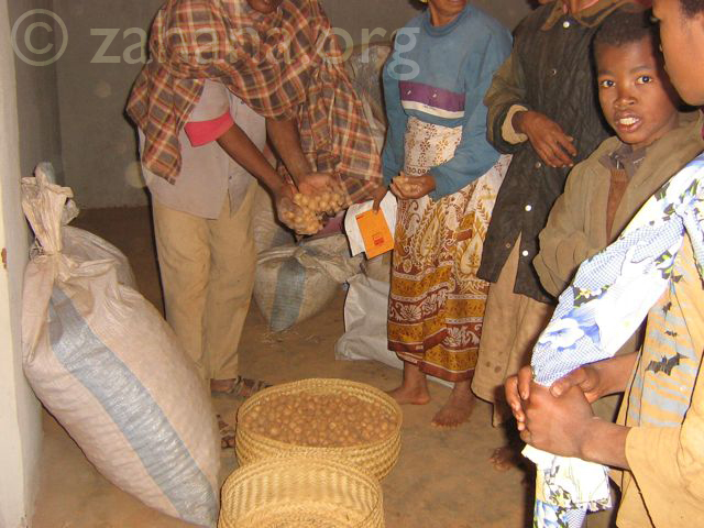 Distributing potatoes as part of the seed bank micorcredit