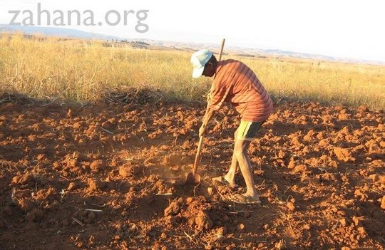 Working the soil for dry land rice planting