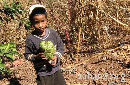 Boy with harvested fruit (soursop) in Fiarenana